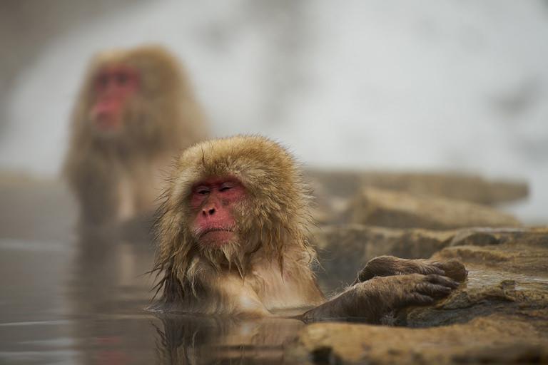 北海道の温泉でアトピーを治しながら大学でWebデザインを学ぶ