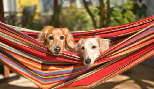 自宅でできる犬を預かるドッグホストの仕事・副業・在宅ワーク